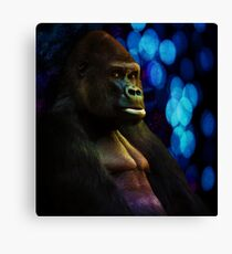Gorilla stare with abstract bokeh background in blue Canvas Print