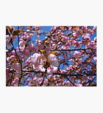 Pink Flora Cluster Photographic Print