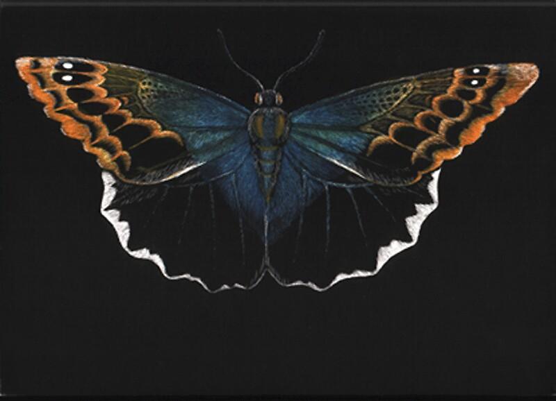 Untitled by Butterflyjenny