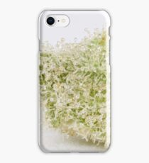 Cannabis Flower Calyx Scooby Snacks iPhone Case/Skin