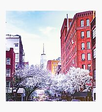 New York City Cherry Blossoms Photographic Print