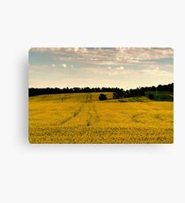 Canola Gold Canvas Print