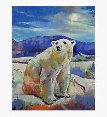 Polar Bear Sun Photographic Print