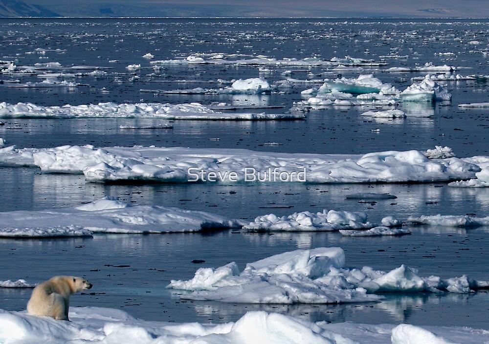 On Thin Ice by Steve Bulford