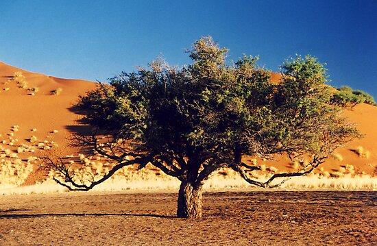 Desert Tree by Michelle Dry