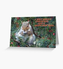 Squirrel in Rowan Tree in York.  Greeting Card