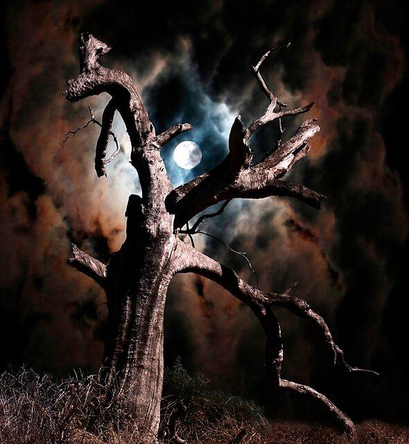 Dead of Night by John Wallace