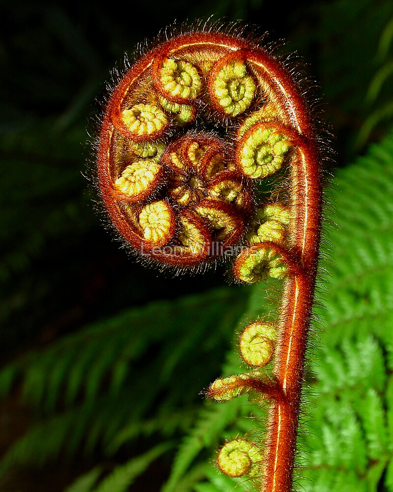 Fern - New Zealand by Leon Williams
