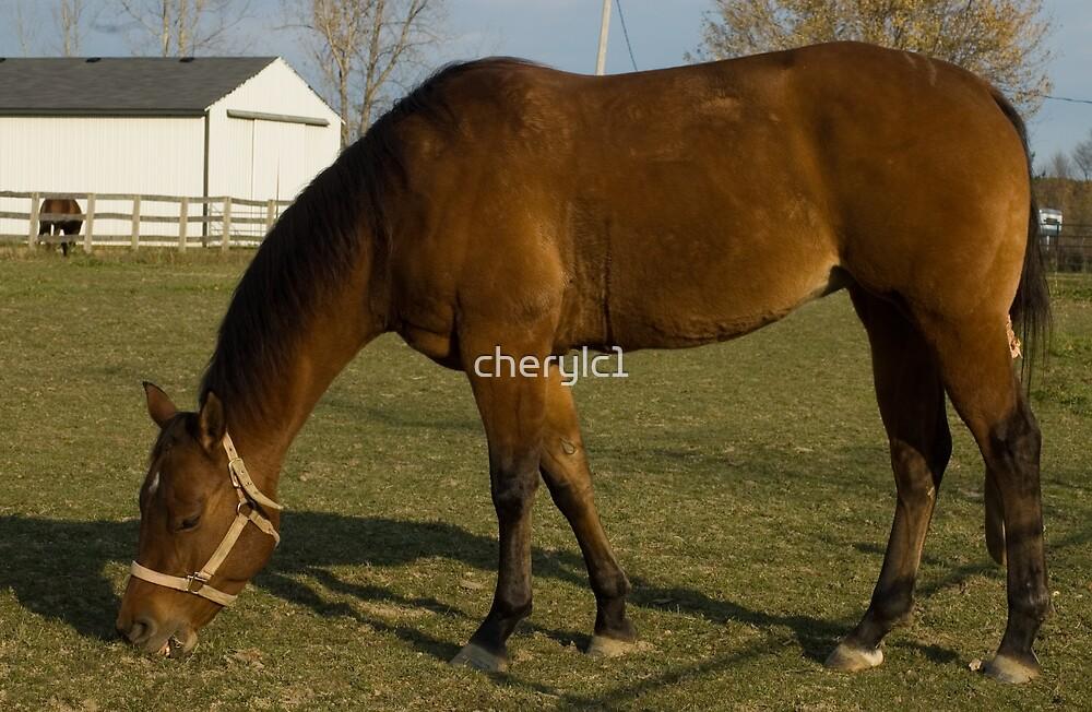 Horse  on the farm by cherylc1