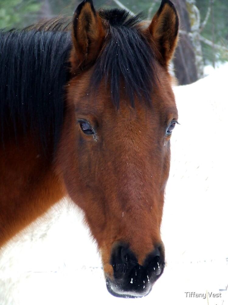Chestnut Horse by Tiffany Vest