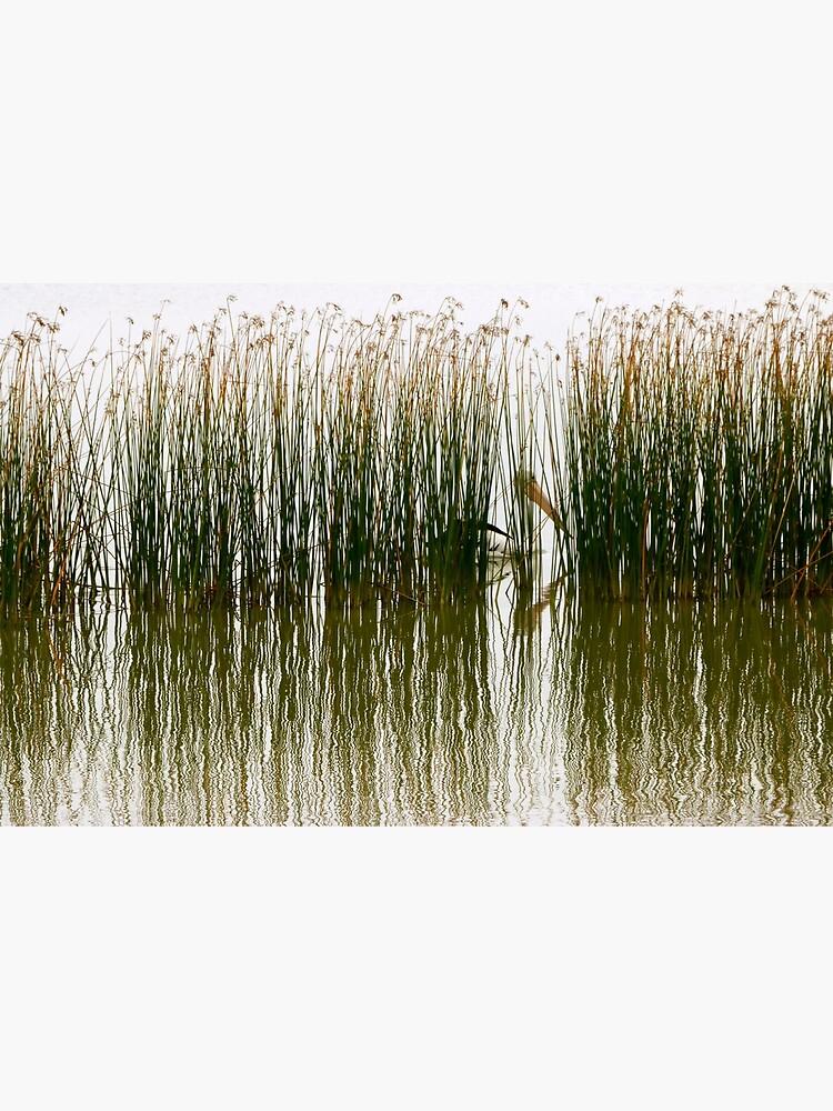 Pelican Hideout by jwwallace