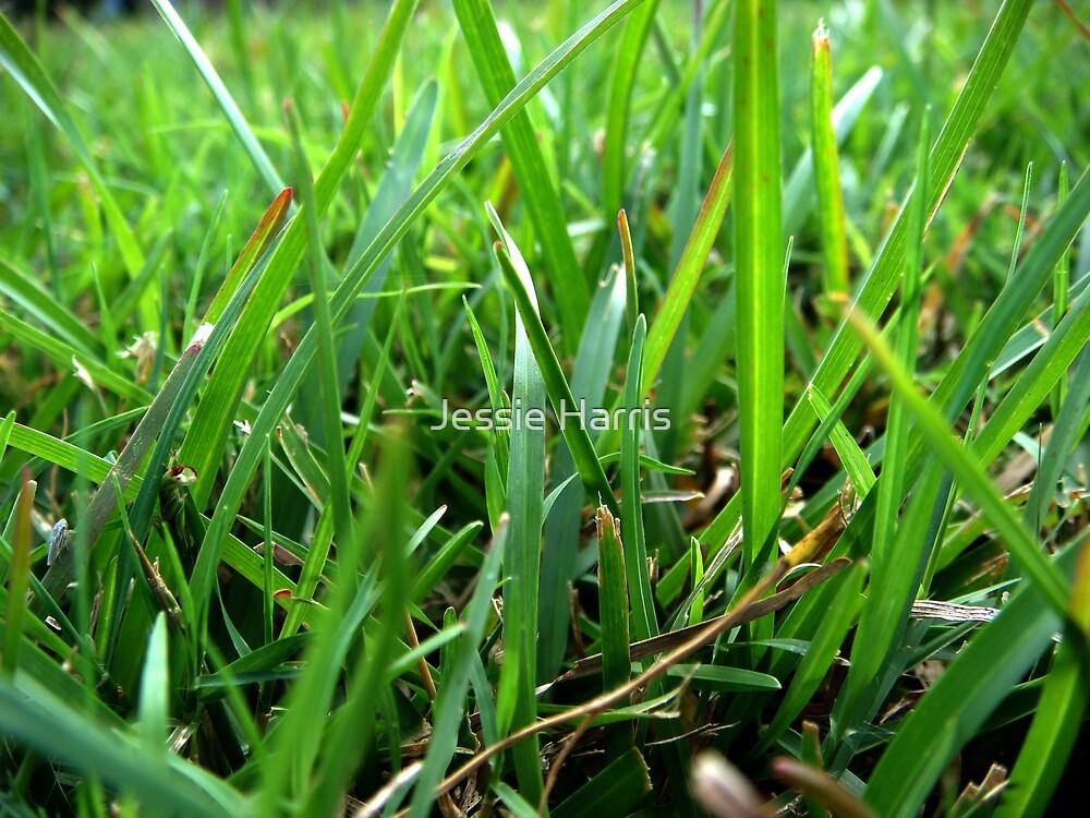 Grass by Jessie Harris