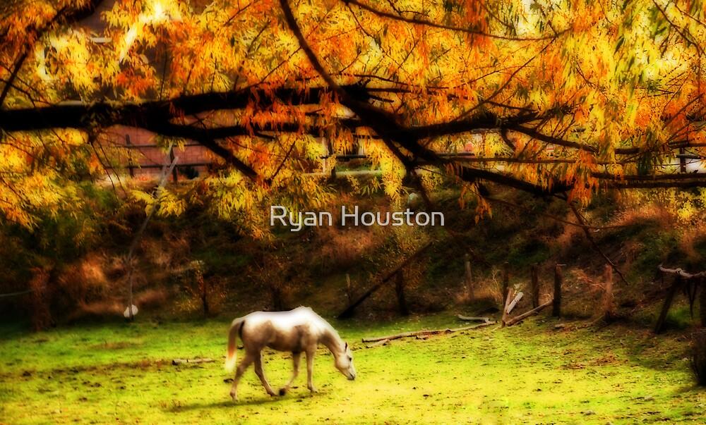 White Horse, Wellsville, Utah by Ryan Houston