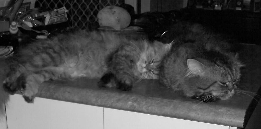 Frankie bored and Pheobe Asleep by footyman