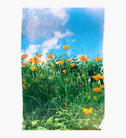 Thinking of you - Orange poppies Poster