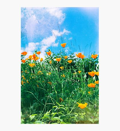 Thinking of you - Orange poppies Photographic Print