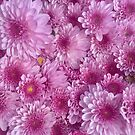 Chrysanthemums  by TeAnne