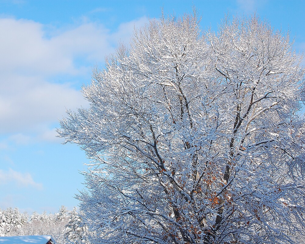 Winter Wonderland by Scott A. Ray