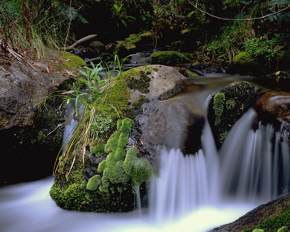 Mossy Creek by gerard