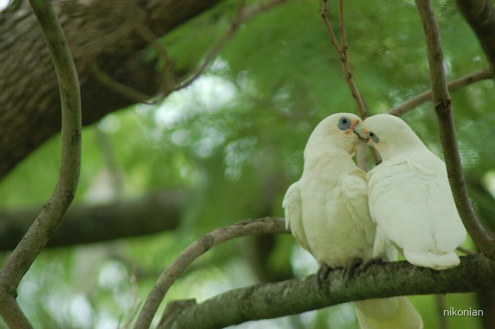 love birds by nikonian