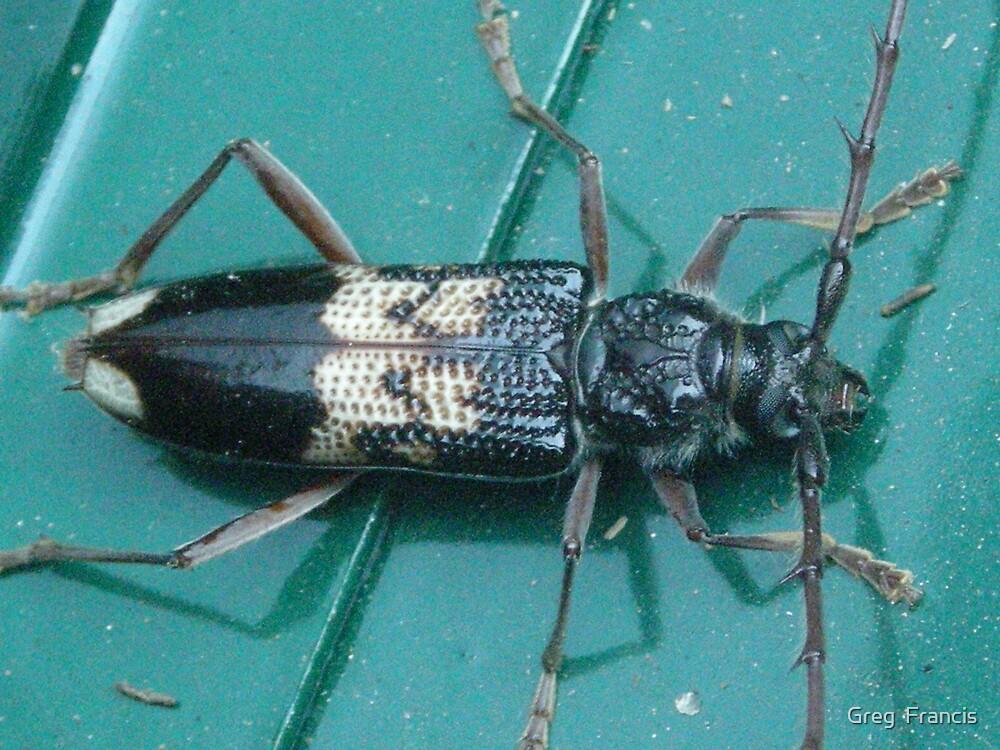 Bug by Greg  Francis