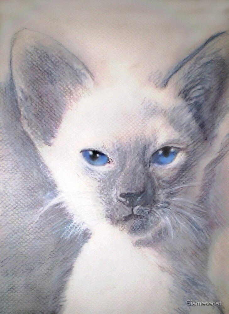 Version Two of Blue Point Kitten... by Siamesecat