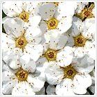 Flower | Flowers | Vintage Inspired White Flowers | Nadia Bonello by Nadia Bonello