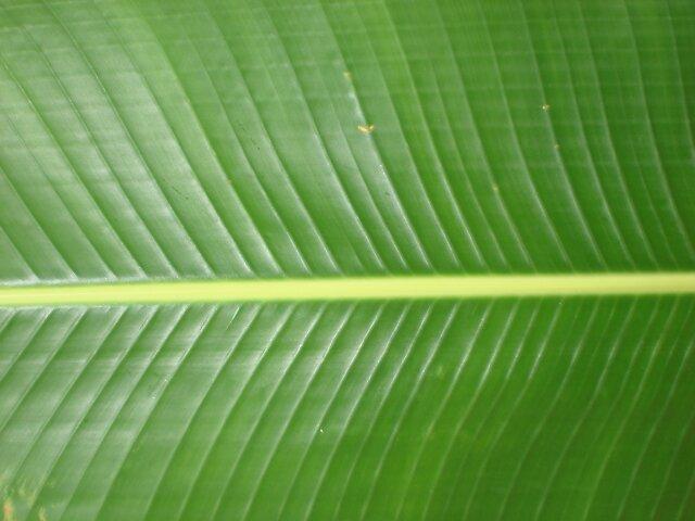 Green Feather by Dario  da Silva