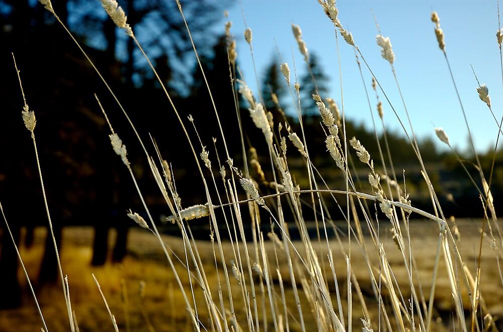 Sunny Winter Morn by Rowan Stenhouse