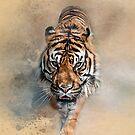 Sumatran Prowler by Brian Tarr