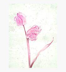 Tulp Photographic Print