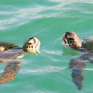 Sea Turtle Photography ...t51 by whiteygilroy