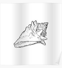 'Silver On White Collection' - Conch Shell Poster