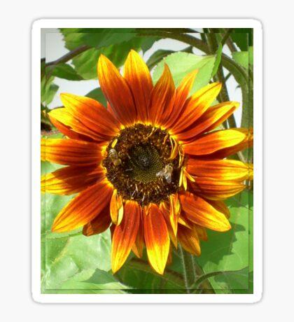 Bees on Red Sunflower Sticker