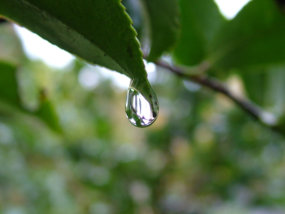 rain drop by Fiona Moran