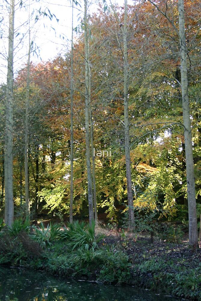 river trees by Iani