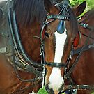 Shire Work Horse by Bine