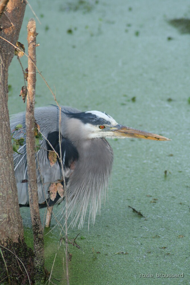 Blue Heron by roxie  broussard