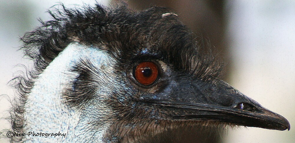 Ernie the Friendly Emu  by Nix76