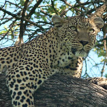 Leopard on the prowl by bwbpro