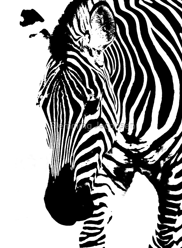 Zebra abstract III by Flemming Jacobsen