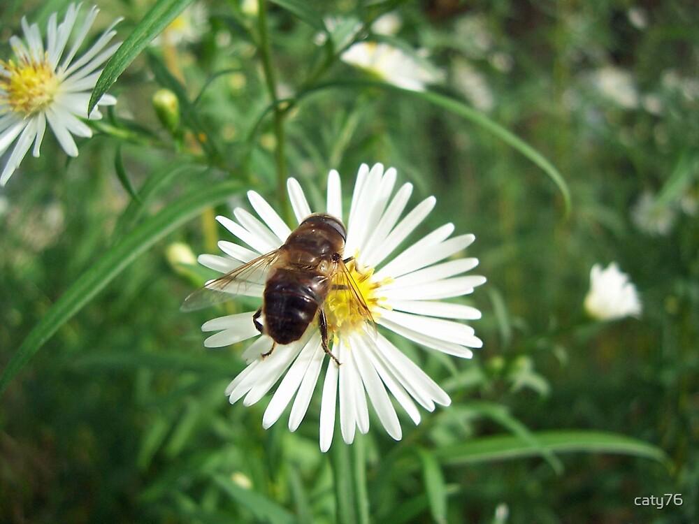 Daisy honey by caty76