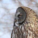 Life Is Good / Great Gray Owl by DigitallyStill