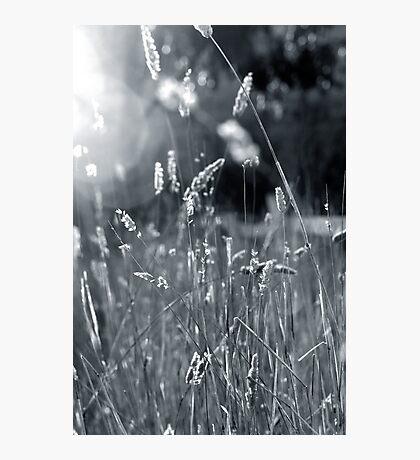 W E E D S Photographic Print
