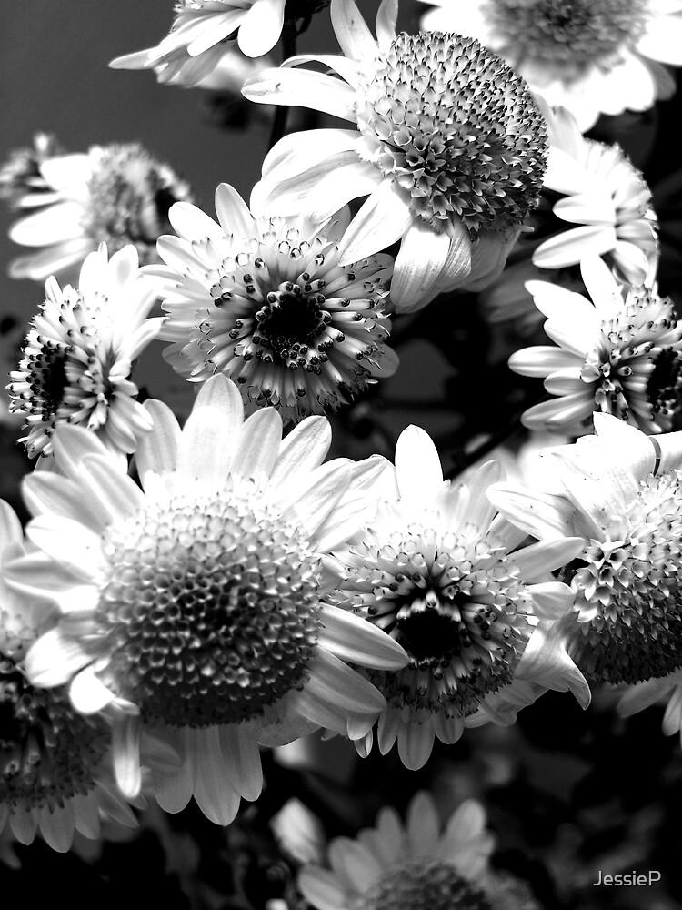 Flowers by JessieP