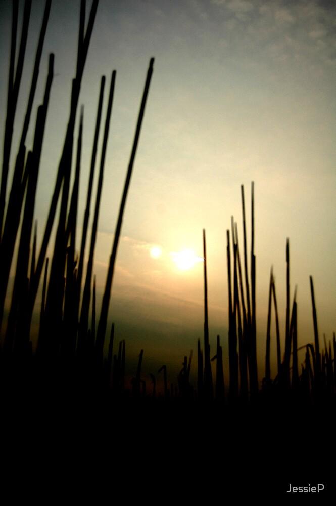 Through the Grass by JessieP