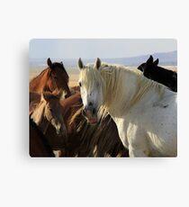 The White Stallion Canvas Print