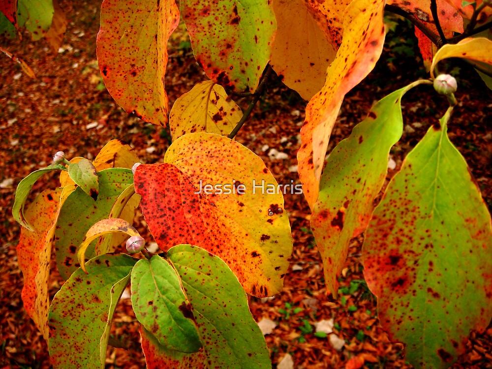 Leaves by Jessie Harris
