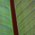 Leaf by John Lines