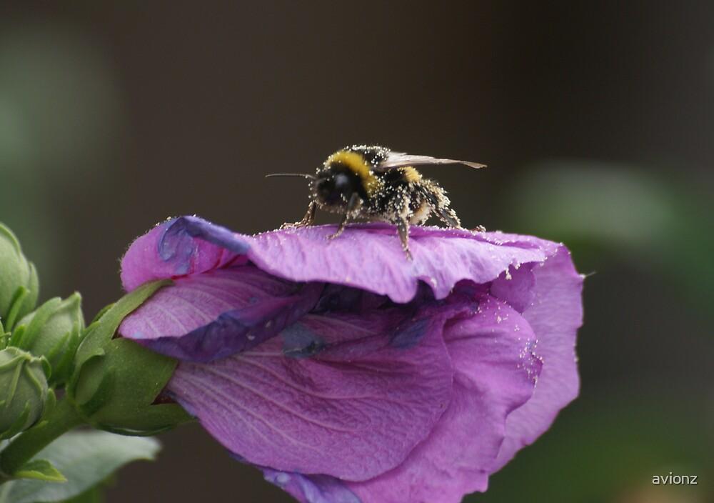 Pollination by avionz